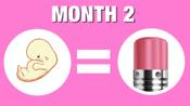 04.Fetal Development_Month 02