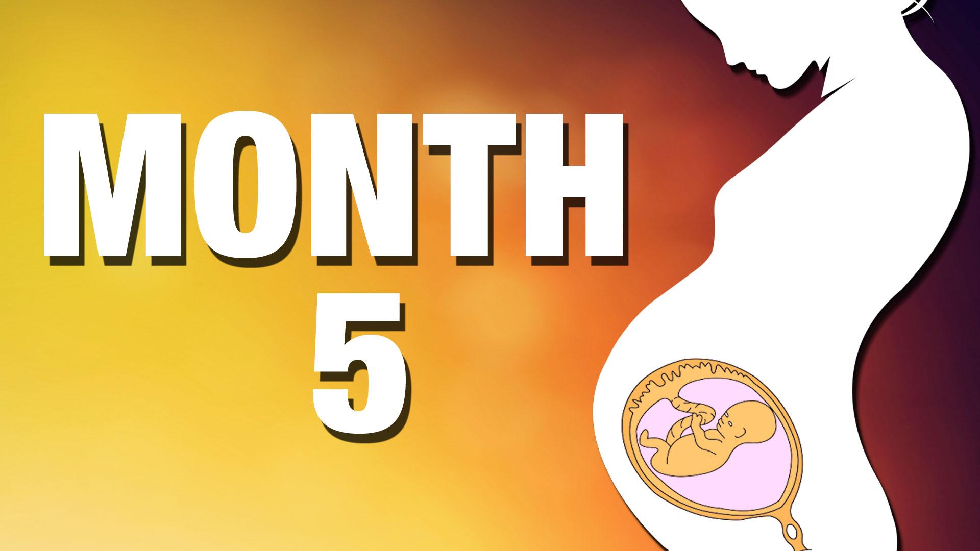 07.Fetal Development_Month 05