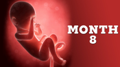 10.Fetal Development_Month 08