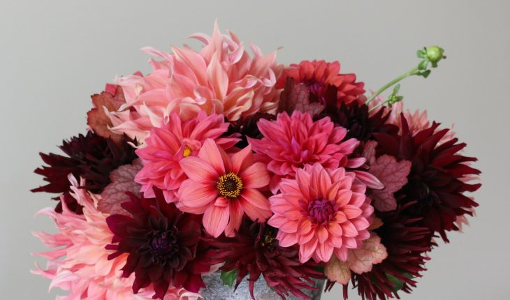 2_flirty-fleurs-sorbetto-dahlia-collection-longfield-gardens