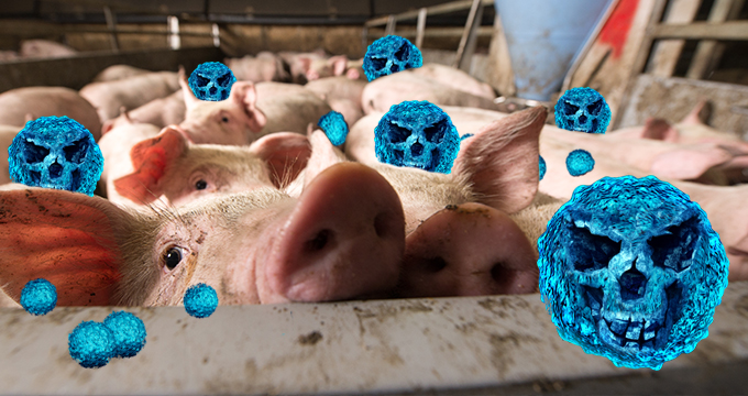 80% of Antibiotics Are Administered to Farm Animals, Not Humans