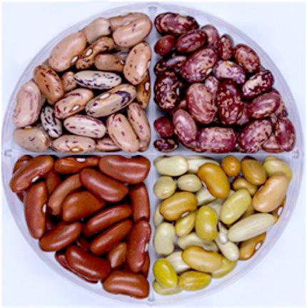 beans-credit-american-chemical-society