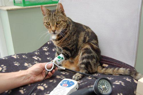 cat blood pressure