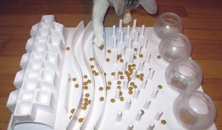 Cat grabbing food