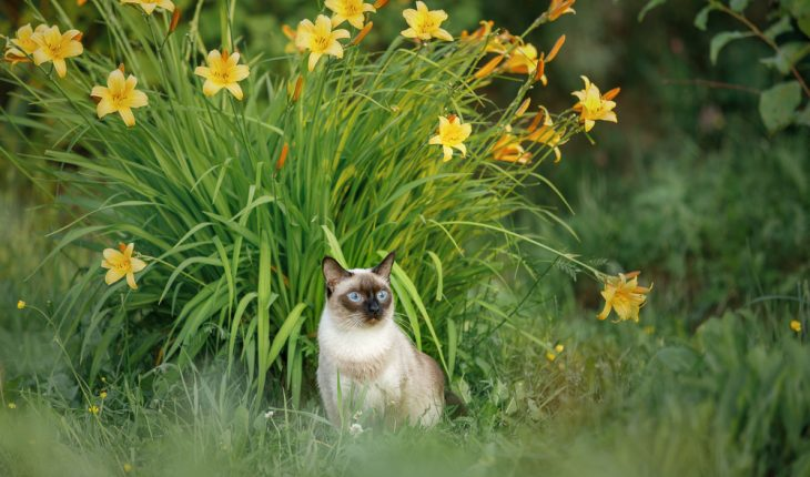 Blue-eyed,Cat,In,The,Summer,Garden,Against,The,Background,Of