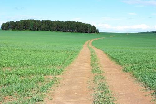 deserted-field