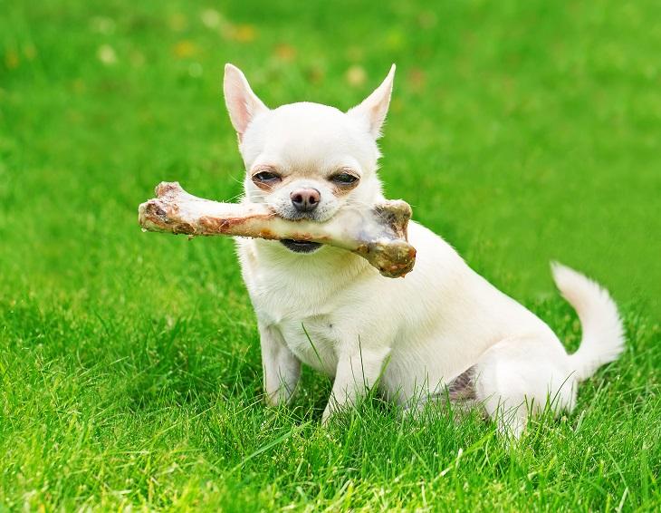 dog-with-bone