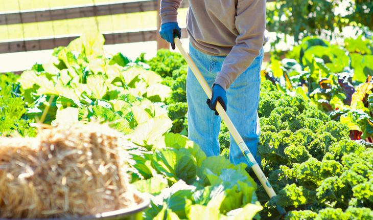 Intensive planting rows_vert_ photocredit_Bonnie Plants