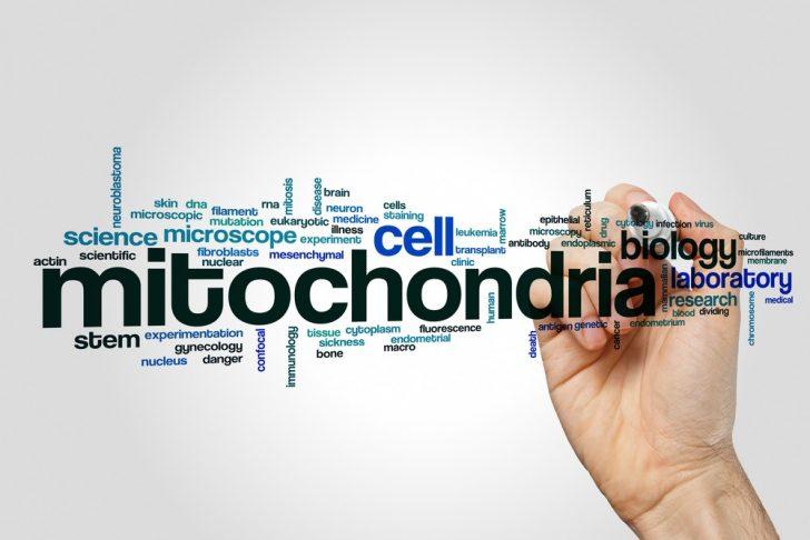mitochondria-word-cloud