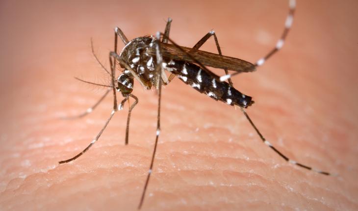Mosquito_Aedes_albopictus photo credit_James Gathany CDC