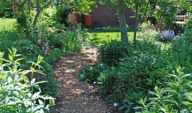 mulched pathway