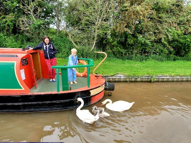 swans and Narrowboat