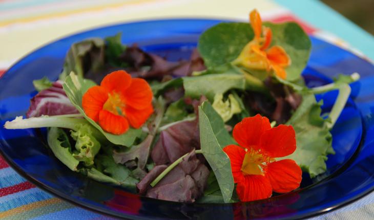 nasturtium in salad