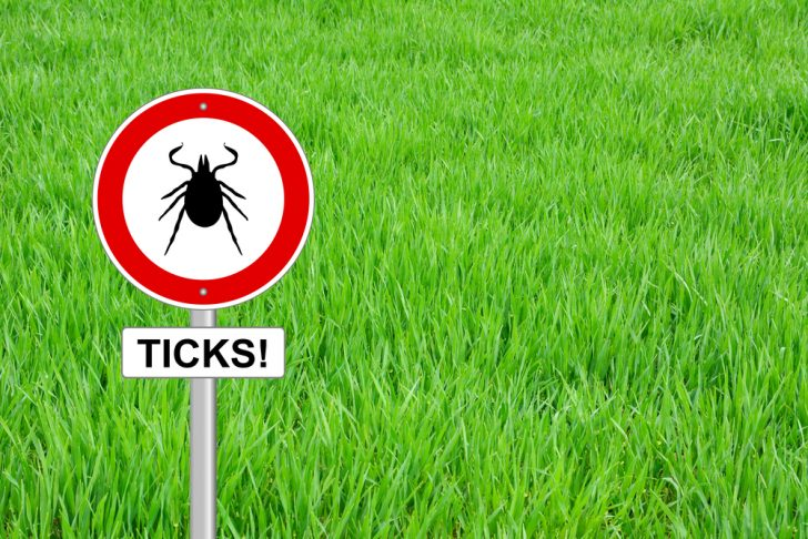 newsletter-20_lyme-disease-risk-anticipated-higher-in-2017