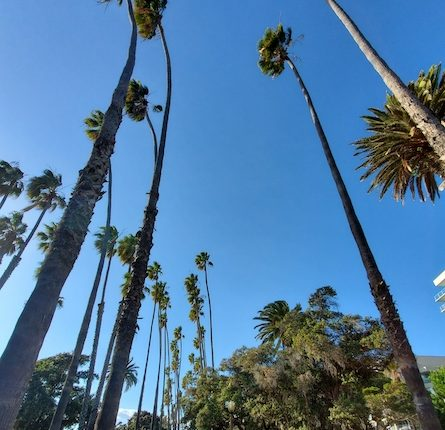 palms-of-santa-monica