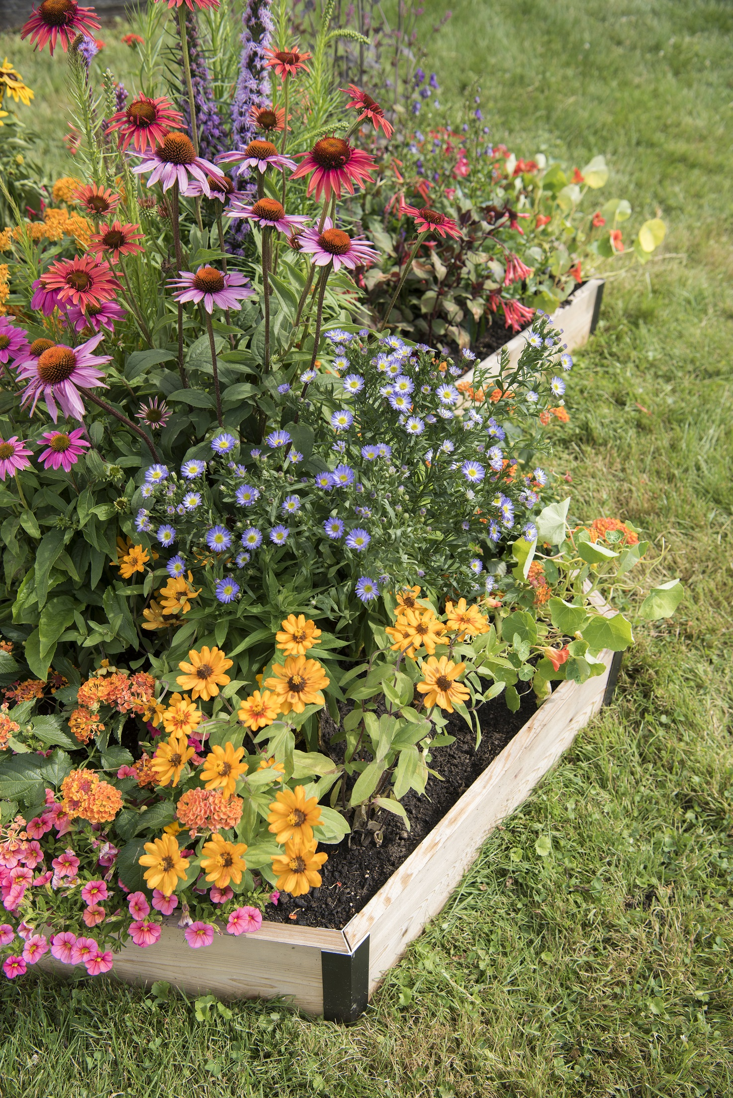 pollinator garden bed
