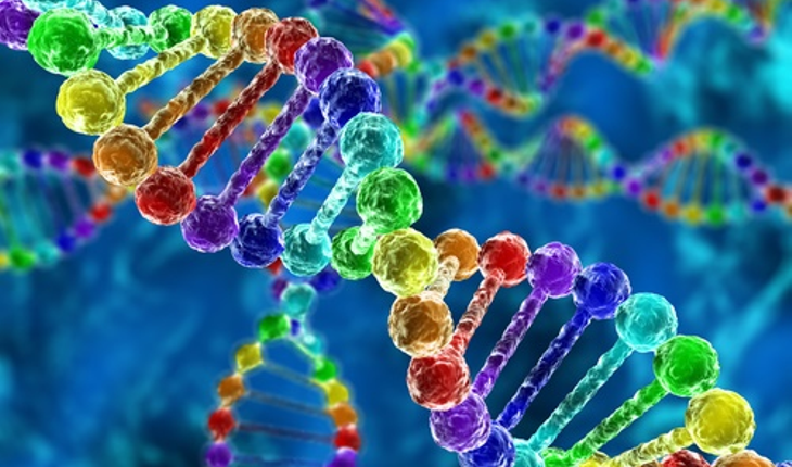 Protein-cells.jpg