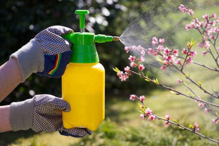 tree-being-sprayed-with-pesticide