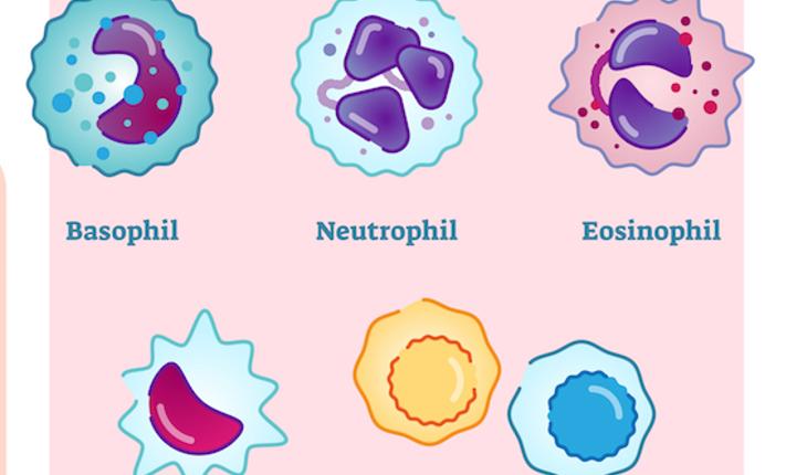 white-blood-cells-copy