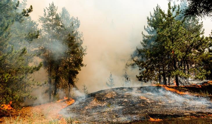 wildfire-smoke