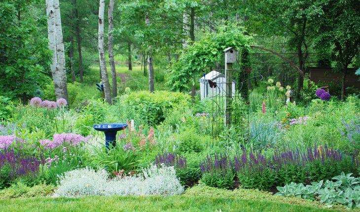 Wildlife friendly garden
