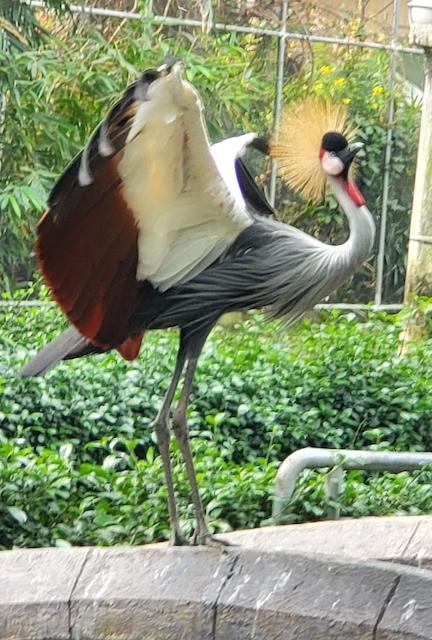 Saigon Zoo bird