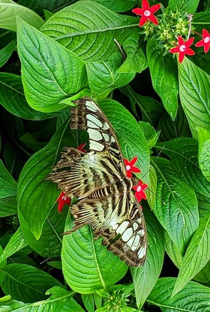 Saigon Zoo butterfly