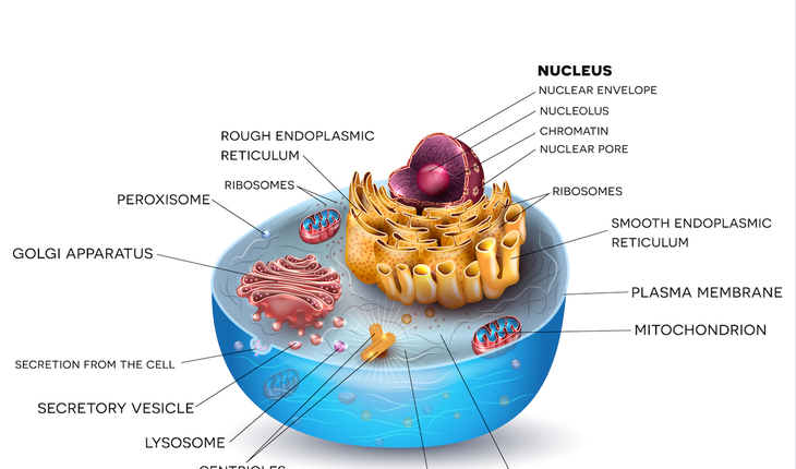 anatomy-of-a-cell