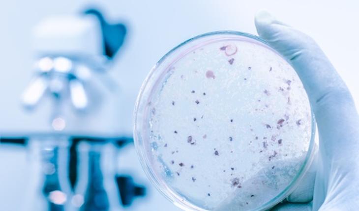 bacteria-cells.jpg