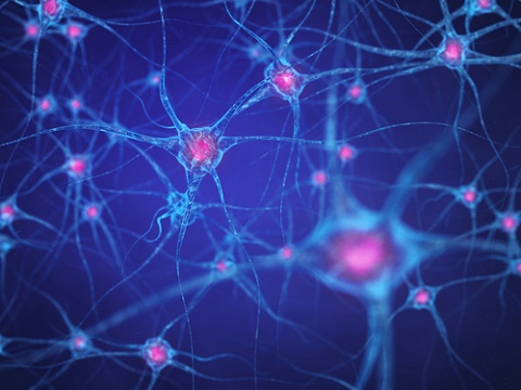 brain-cells-2