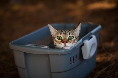 cat frightened