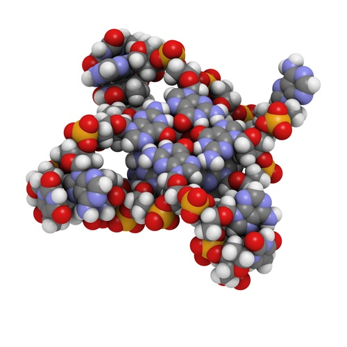 cells-telomeres.jpg