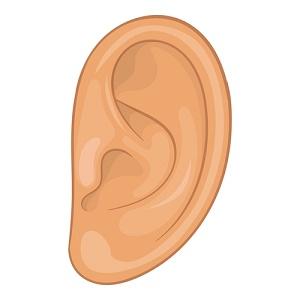 diagram of ear