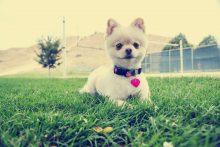 dog collar and tag