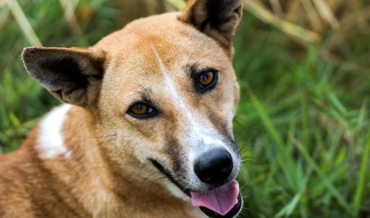 dog-looking-up.jpg