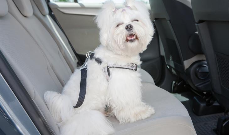 dog secured in car