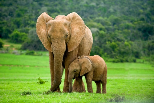 elephant-mother-and-baby.jpg