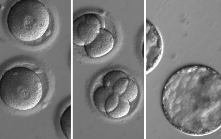 embryo-sequence