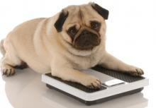 fat dog on scale.jpg
