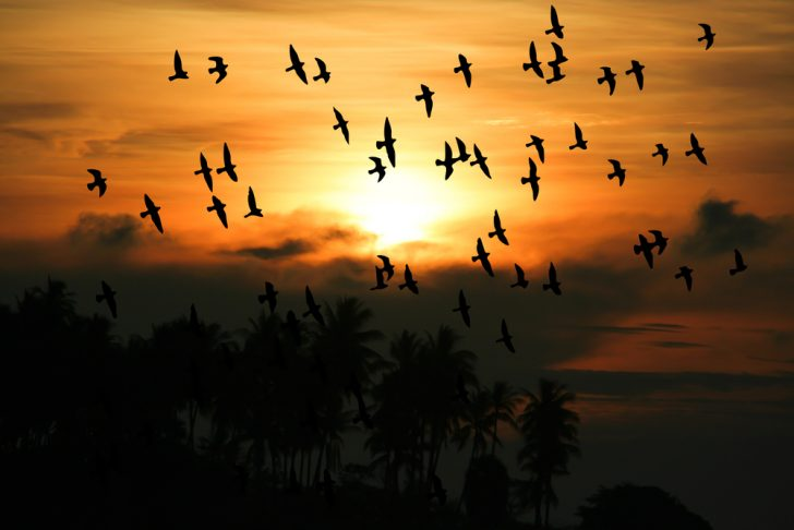 group of birds flying
