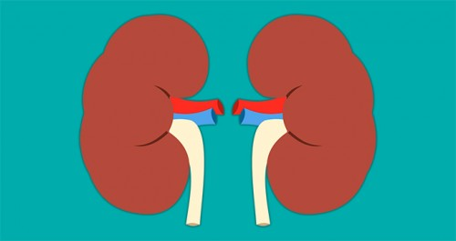 What is Kidney Cancer?