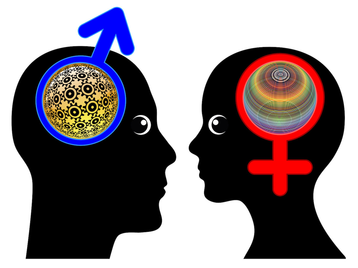 male and female brains