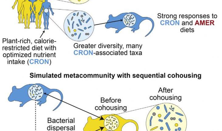 microbiota and diet