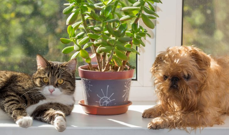 pets and plant