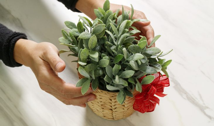 plant as gift