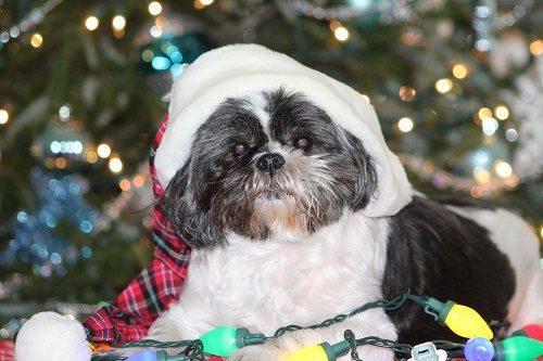 dog with a sleep hat on
