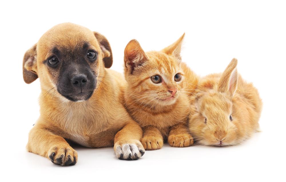 puppy-kitten-bunny