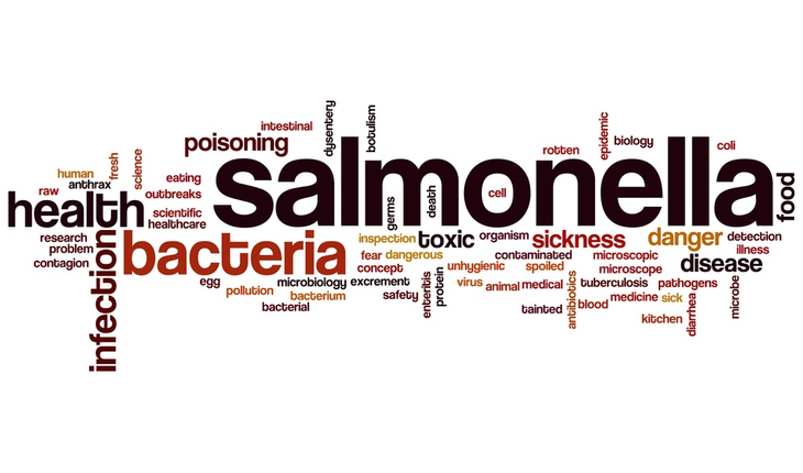 salmonella-word-cloud