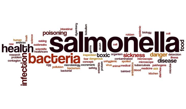 salmonella-word-cloud