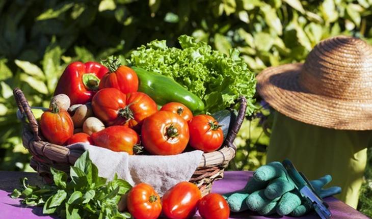 tomatoes-in-garden.jpg